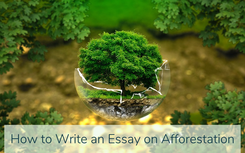Essay on Afforestation