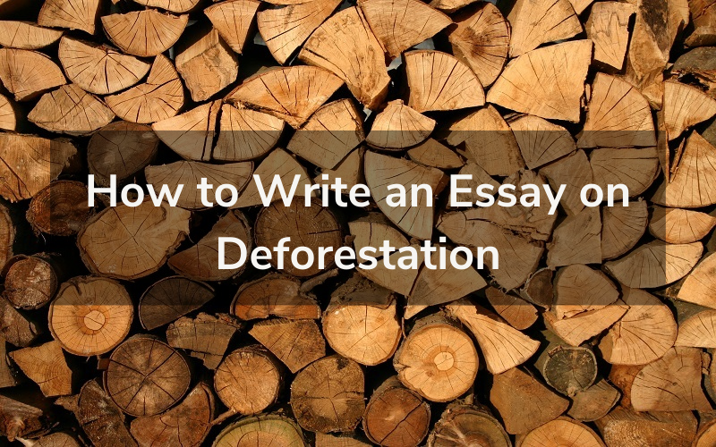How to Write an Essay on Deforestation